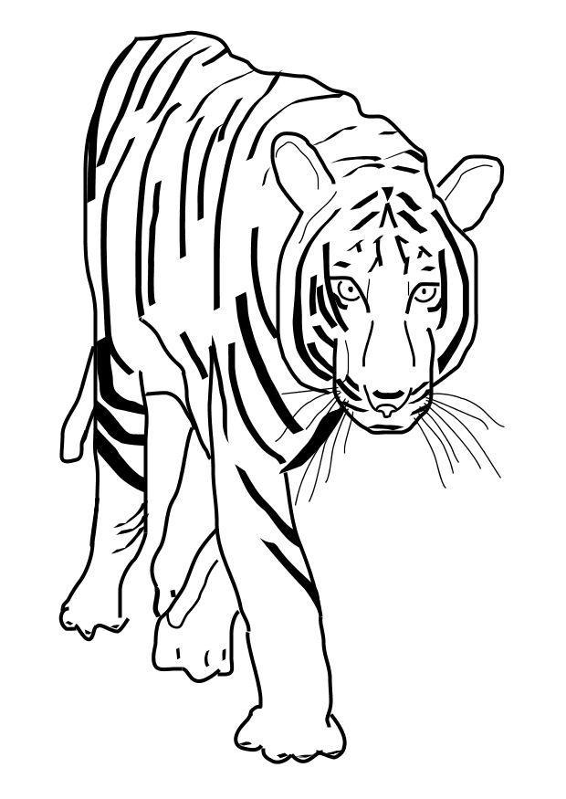 P 225 Gina Para Colorir Tigre Img 10101 Images
