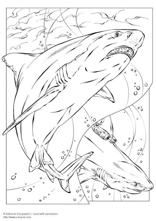 P gina para colorir tubar o img 5735 for Immagini squali da colorare
