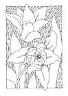 Página para colorir tulipas