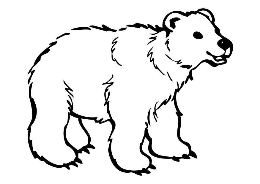 P gina para colorir urso img 10262 for Disegno orso per bambini